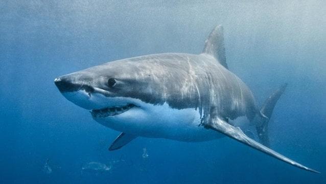 Mısır'da köpekbalığı saldırısı... Bir turist öldü