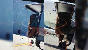 Arılar İstanbul Havalimanına kondu!