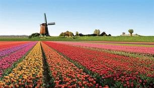 FTI Group Hollanda pazarında